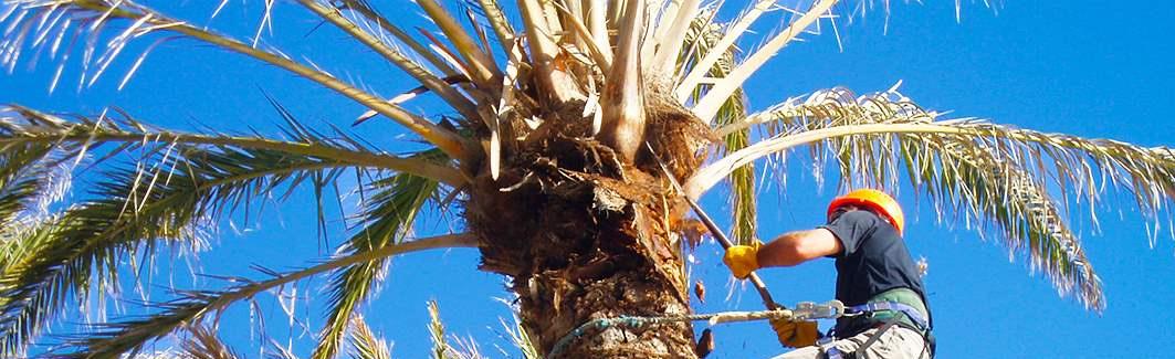 mantenimiento-palmeras_editado-1